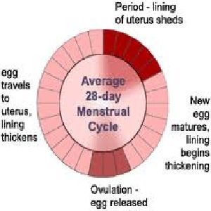 How To Make Your Period Shorter Naturally