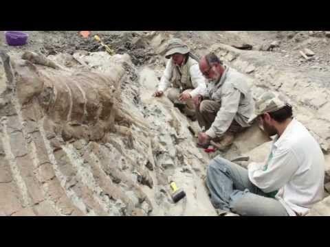 ▶ AVANZA RESCATE DE COLA DE DINOSAURIO EN COAHUILA - YouTube, advanced, dinosaurios!