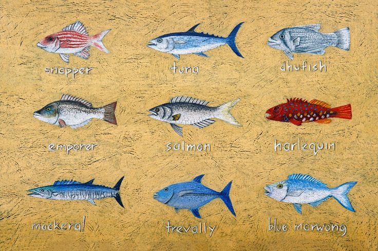 From a series of fish pictures created By unique west australian artist Mandy Evans. This fish drawing is available to buy or to share with simple buttons