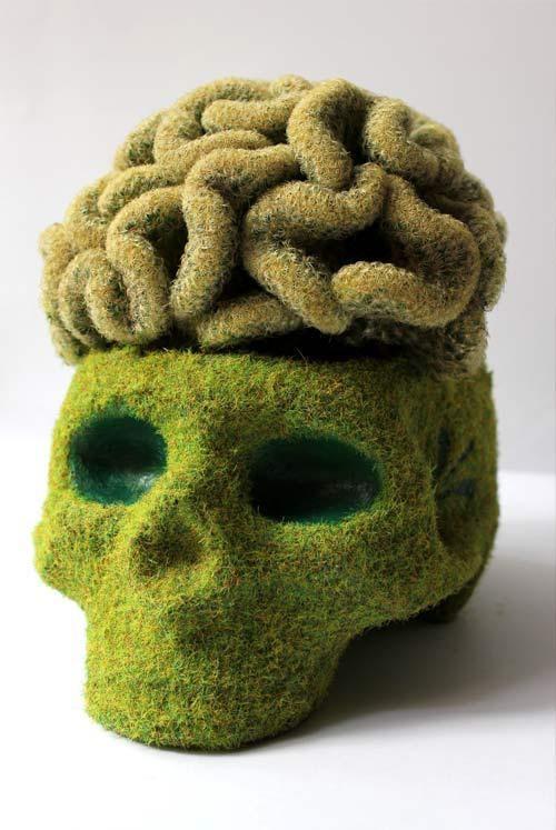 Image result for brain cactus mammillaria elongata monstrosus weird