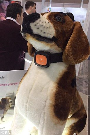 The Scout5000 - effectively a smartphone for dogs - can monitor a dog's health, track their location and even allows owners to speak to their pets remotely [Wearable Electronics: http://futuristicnews.com/tag/wearable/]
