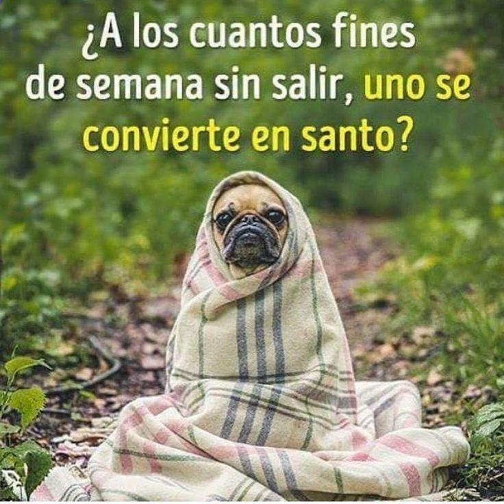 Imagenes de Chistes #memes #chistes #chistesmalos #imagenesgraciosas #humor www.megamemeces.c... → → → http://www.diverint.com/imagenes-humor-sexo-telefonico
