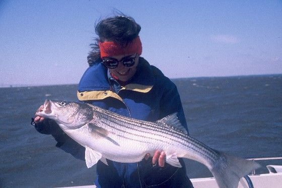 10 tips for striped bass fishing in the fall gone for Fall bass fishing tips
