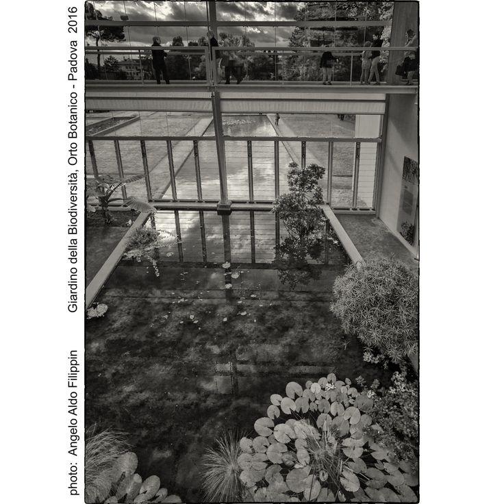 https://flic.kr/p/KrWx8e | Il Giardino della Biodiversità, Orto Botanico Università di Padova fondato nel 1545 - Padova 2016