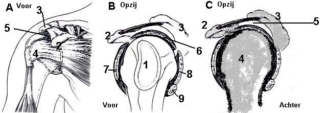 oorzaken van schouderpijn is inklemming