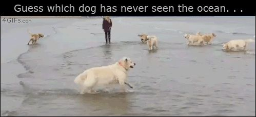 Funny Friday: Dog in the Ocean
