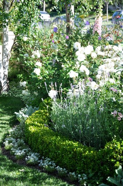 Garden layered within a garden.... Hmm, like the alyssum bordering the shrubs. Might be nice along the walkway...