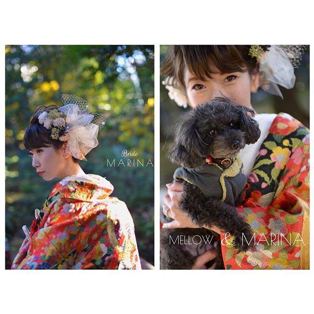 赤坂氷川神社での婚礼にて ・ 新婦のマリナさん✨ ショートヘアに大きなへッドドレス姿がオシャレで美しい花嫁さま 色打掛の柄や刺繍も似合っててます❤️ ・ 髪飾りはなんとお母様のお手製🎀 センスがいいですよね〜 愛犬のメロウと一緒に記念写真もかわいい✨✨ ・ KIKI PARLOURでヘアメイク、着付け、衣装、コーディネートを担当させていただきました🙌 和装、神社での婚礼をお考えの方はぜひご相談下さい☝🏻 ・ #赤坂氷川神社 #赤坂 #日本の結婚式 #和装 #色打掛 #着物 #着付け #結婚式 #和装婚礼 #前撮り#プレ花嫁 #髪飾り#ショートヘア花嫁 #花嫁 #愛犬#hairarrange #hairmake #wedding #bridal #dog #weddingphotography #kimono #japan #shorthair #kikiparlour #kikiparlourのお支度