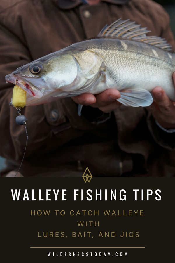 Walleye Fishing Tips How To Fish For Walleye And Catch Them Walleye Fishing Tips Trout Fishing Tips Walleye Fishing