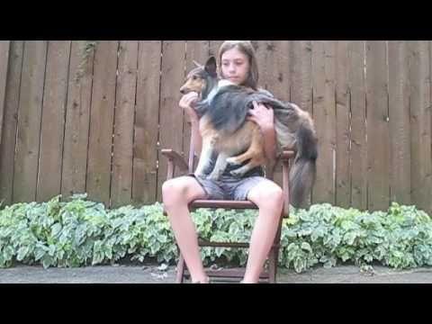 Comment apprendre à son chien à saute dans nos bras? - YouTube
