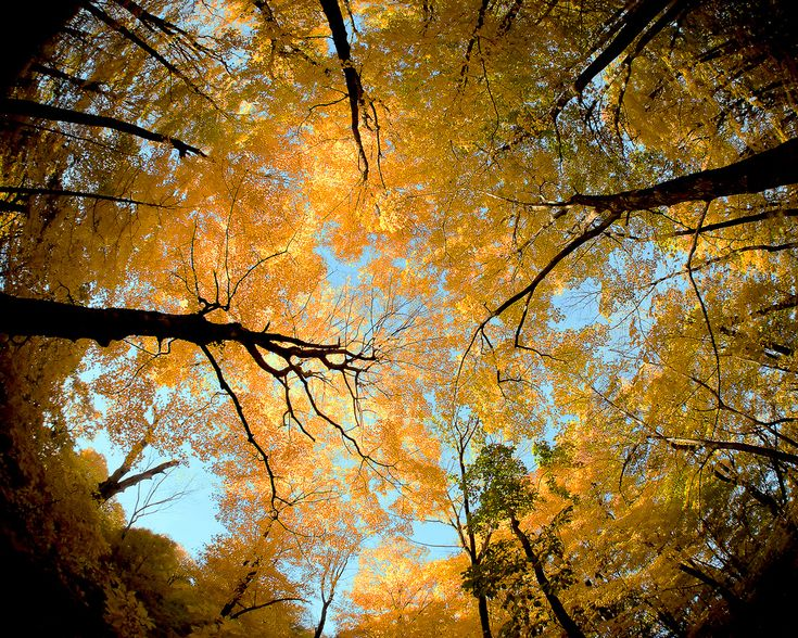 The beautiful autumn canopy high atop Blue Mound State Park outside of Mount Horeb, Wisconsin.