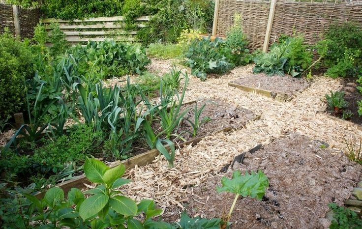 Proti škodcom v záhrade bez chémie.