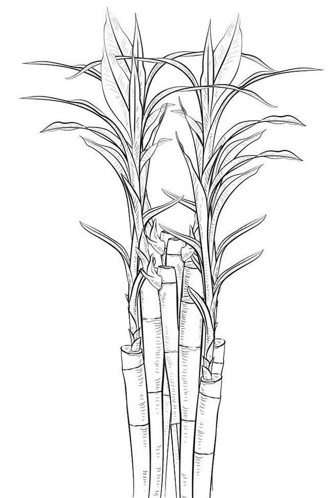 Bamboo Coloring Page Bamboo Shoots Coloring Picture Coloring Pictures Zoo Coloring Pages Digital Paint Color