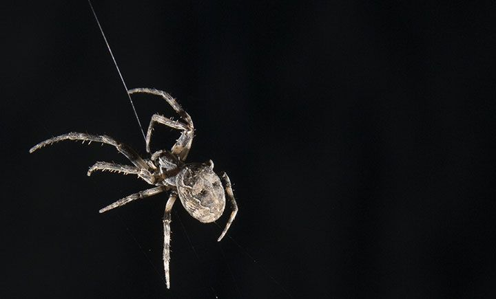 10/30/17 SPIDER SILK MICROPHONES  Time to get past your arachnophobia. Spider webs could be the basis for better microphones in hearing aids, cell phones and more.  A new study from distinguished professor Ron Miles uses spider silk to make more effective, directional microphones that can pick up a wide range of frequencies.