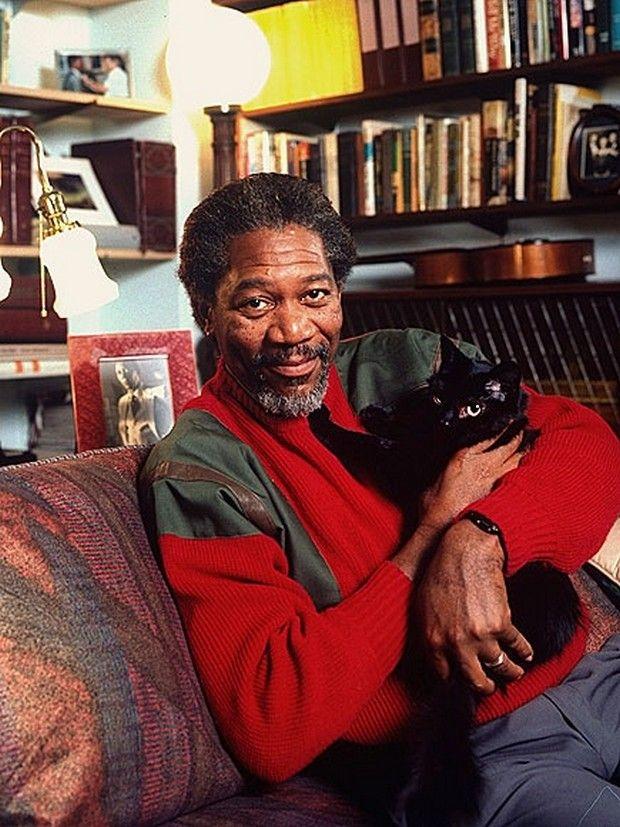 celebrities cat - Buscar con Google