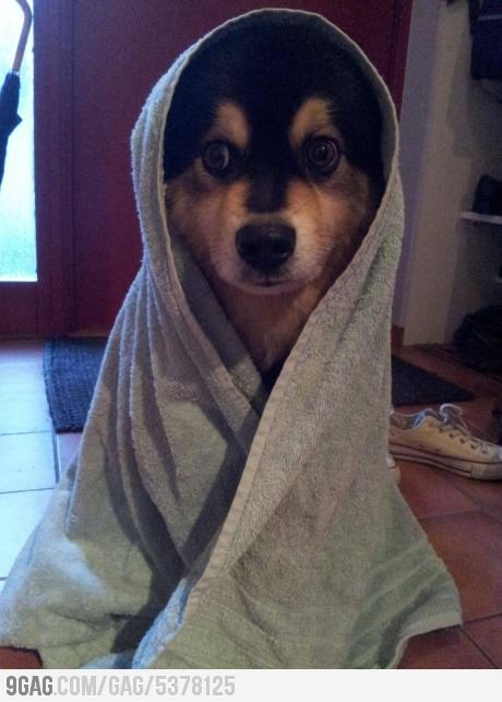 Puppy after bath time.