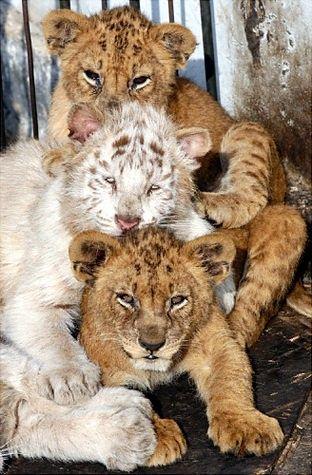 cub cub cub...
