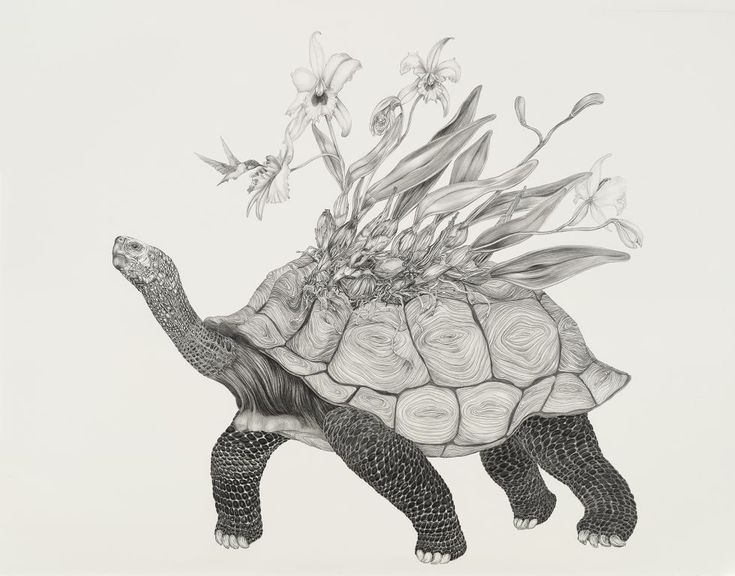Tara Tucker's Bestiary...OMG these illustrations are gorgeous
