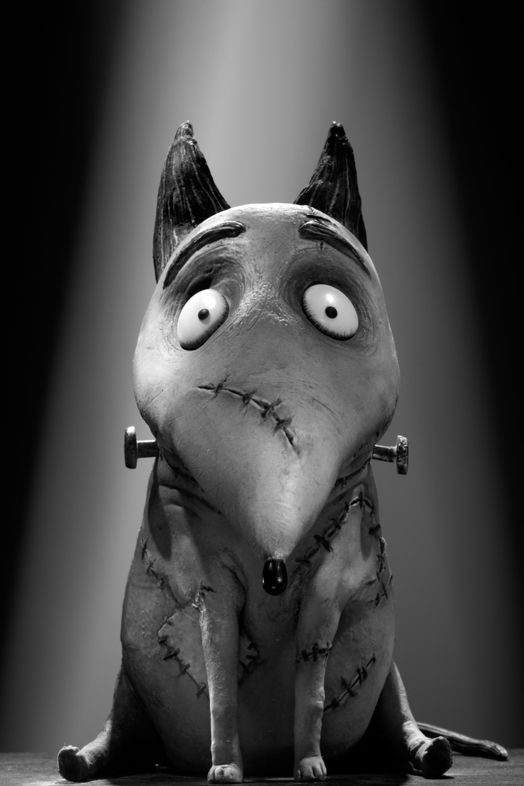 Sparky the Franken #Bullterrier by Disney Studios #English #Bull #Terrier #Dog #Dogs #ZombieDog #Movie #Frankenweenie