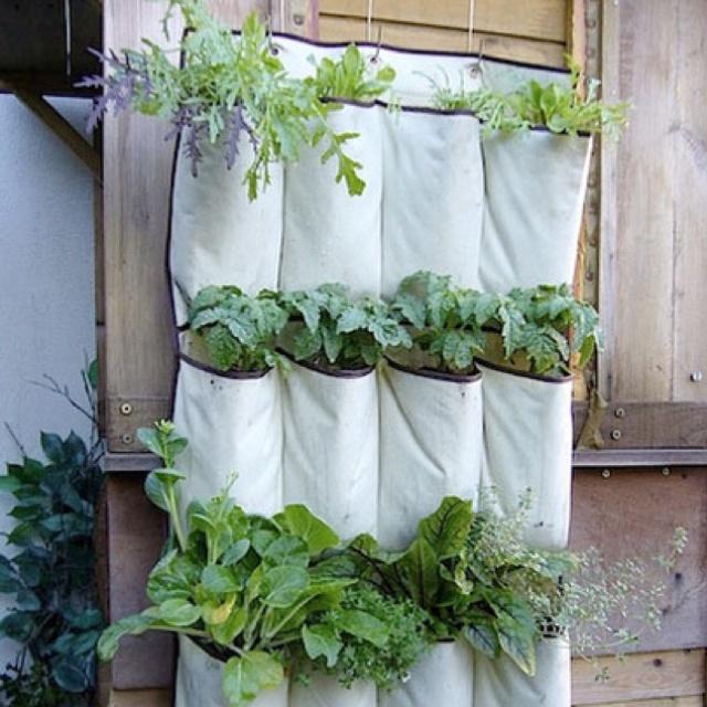 DIY Shoe organizer garden