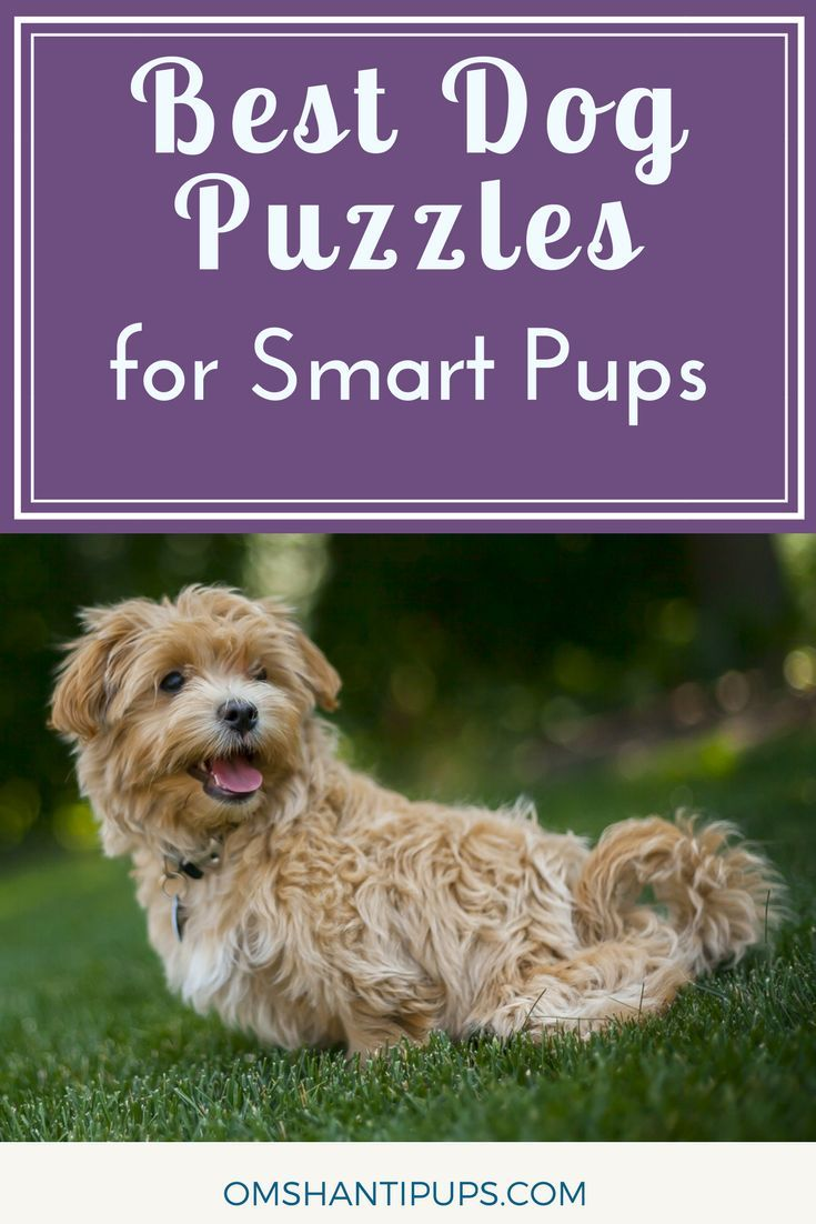 Top 10 Dog Puzzles You Need To Exercise Their Brain Losing A Dog Dog Puzzles Dog Activities