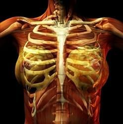 Costochondritis in Fibromyalgia  Chest & Ribcage Pain    OMGosh!  THERE IS A NAME FOR THIS! MLF:)