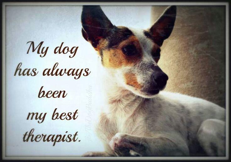 Ralf Pet Thrapy Dog