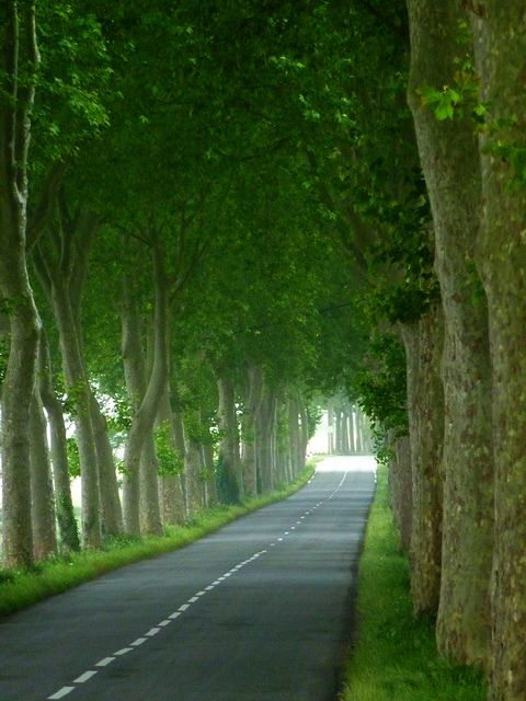 Tree Tunnel, Burgundy, France    The tree tunnels were one of my favorite things about road trips in France...