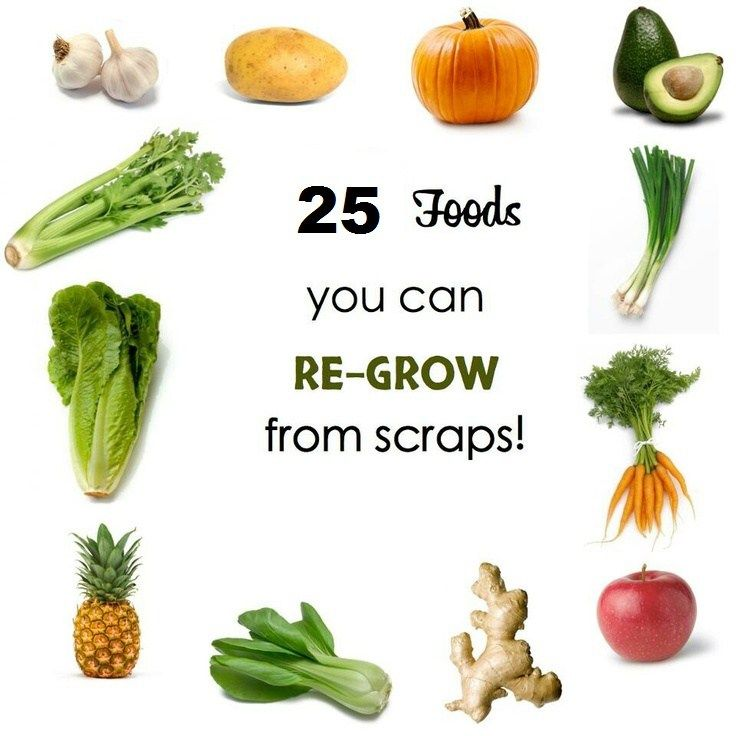 25 Foods You Can Re-Grow From Kitchen Scraps