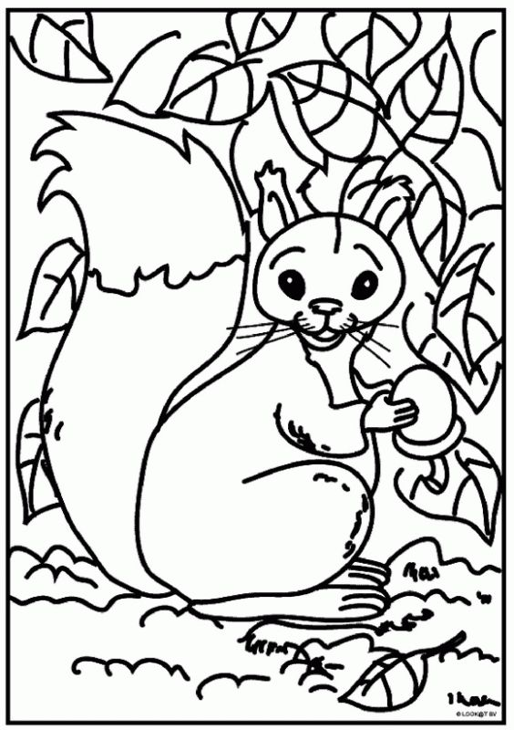 Animal Coloring Printables For Kindergarten Best 25 rainforest