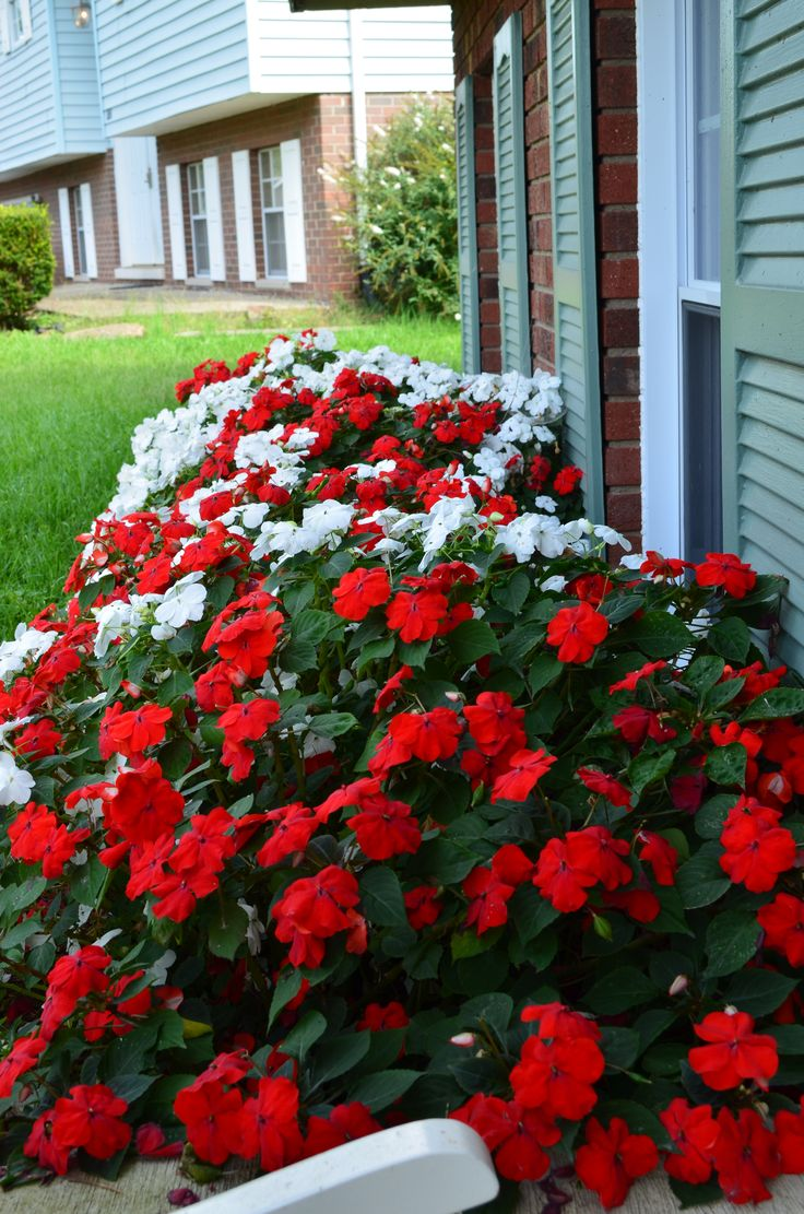 Outdoor flowers that like sun - Need To Plant Impatients In Front Of The House This Spring Because Its Shaded