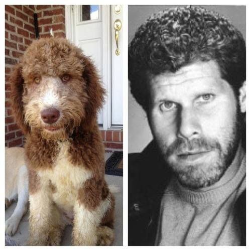 A dog and Ron Pearlman...