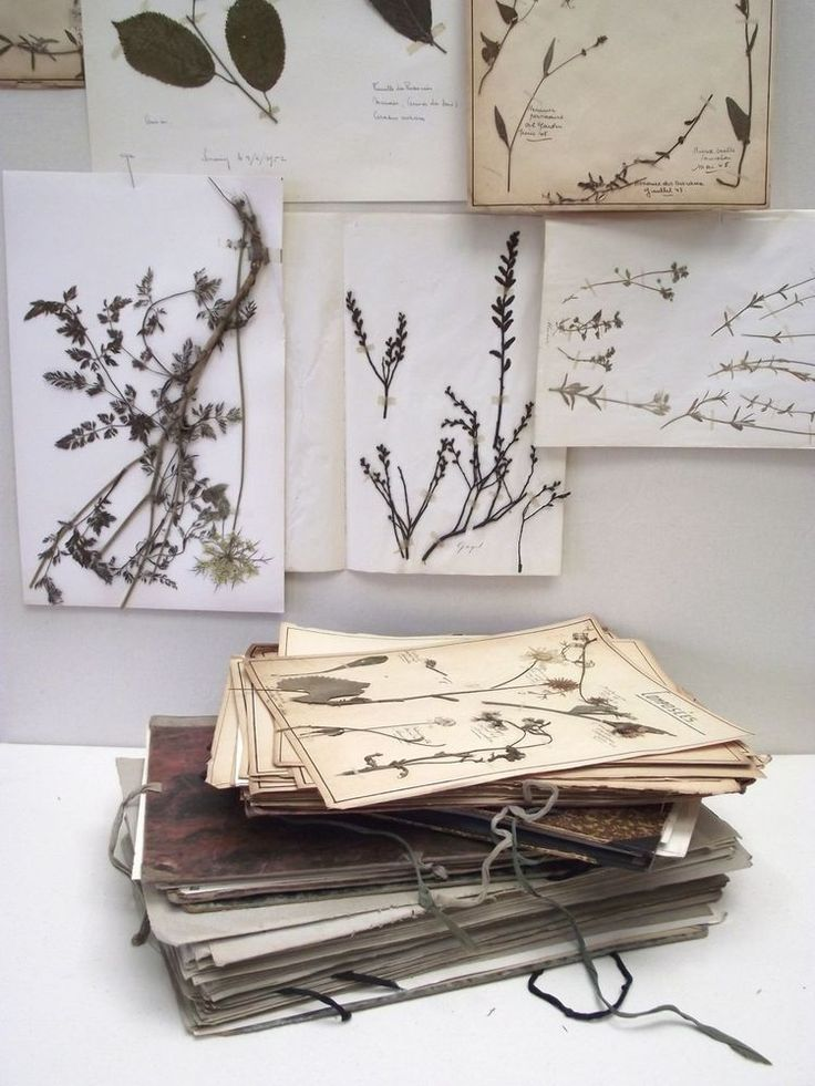 Image of Large Collection of Pressed Flower Pages - 100+ (free shipping)