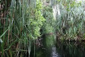 Rawa adalah lahan genangan air secara ilmiah yang terjadi terus-menerus atau musiman akibat drainase yang terhambat serta mempunyai ciri-ciri khusus secara fisika, kimiawi dan biologis.