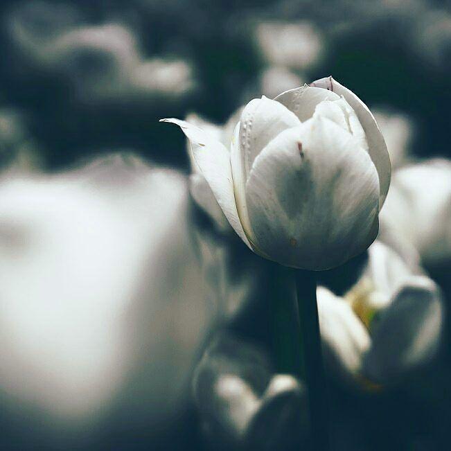 Białe rośliny w ogrodzie są piękne  #whiteflowers #blackandwhite #inspiration #bialekwiaty #kwiaty #wogrodzienajlepiej http://buff.ly/2hMZQwa