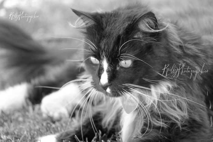 #photoshoot#cat#bestfriend#animal#black#white#
