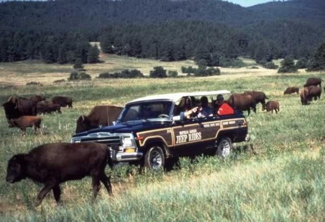 Buffalo Safari Jeep Tours Custer Sd
