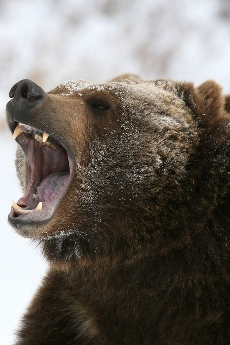 TOP 10 Deadliest Animals In The World #You'll Never Guess Number 1