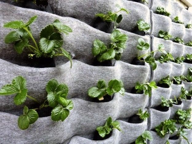 Apartment Vertical Gardening Freedom For Sustainability In 2020 Vertical Garden Diy Vertical Vegetable Gardens Vertical Vegetable Garden