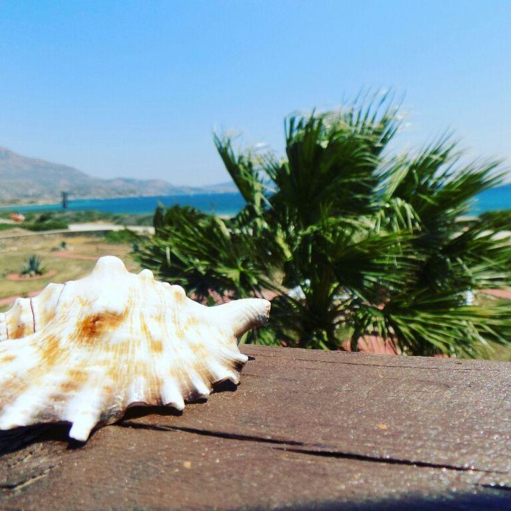 #bluelagoon#studios#greece#karpathos #seashell#seaview