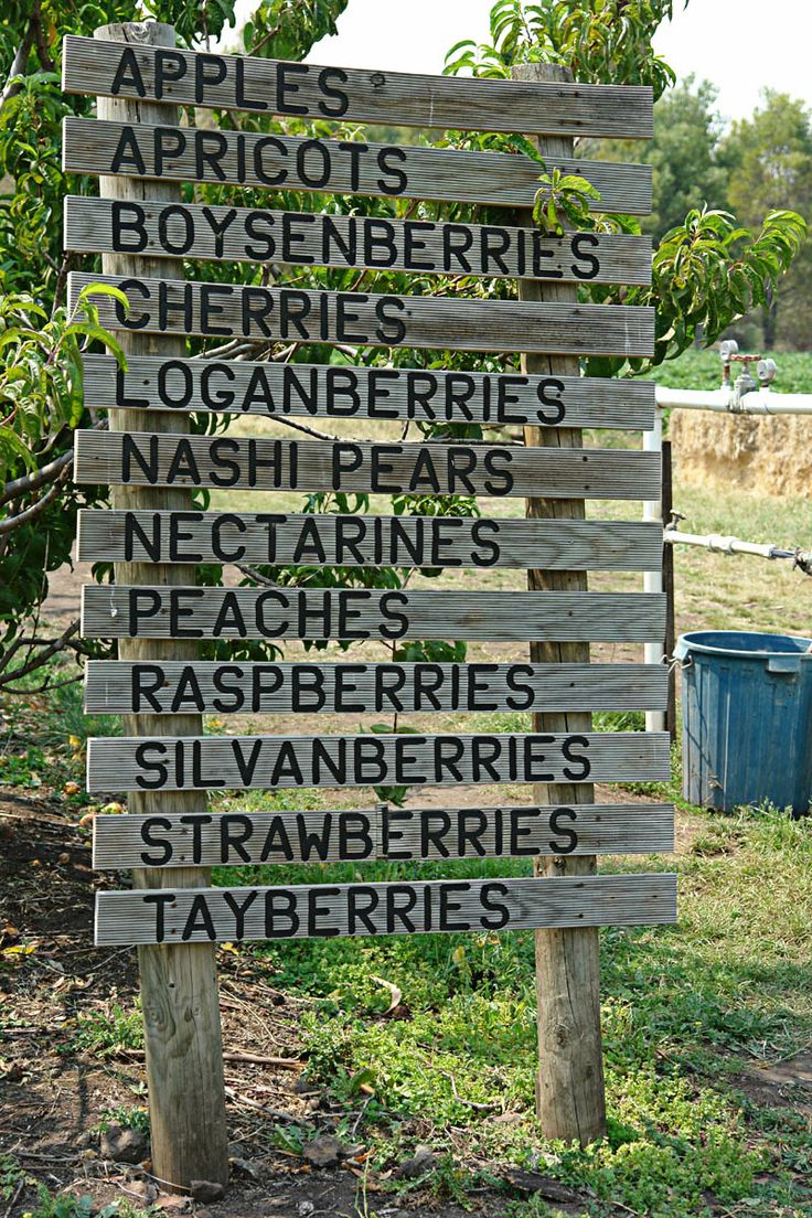 Sorell: Home to the Sorell Fruit Farm and home to Harcourts Sorell.