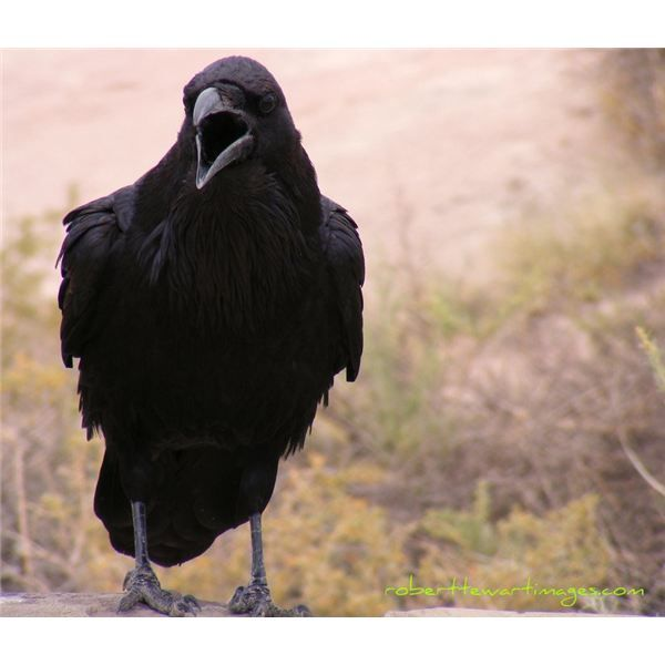 personification and allusion the raven The raven: poetic devices mood hyperbole allusion personification most and least alliteration entreating entrance at my chamber door(line 17) nodded, nearly napping(line 3).