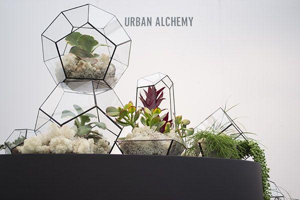 best 25 mini plants ideas on pinterest. Black Bedroom Furniture Sets. Home Design Ideas