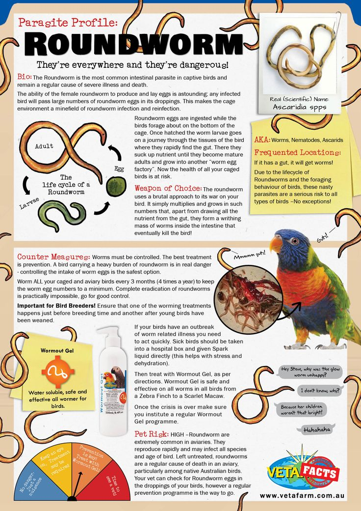 They're everywhere and they're dangerous!   Worm ALL your caged and aviary birds every 3 months (4 times a year) to keep the worm egg numbers to a minimum. Complete eradication of roundworms is practically impossible, go for good control.   Contact the Vetafarm team for more info!  www.vetafarm.com.au