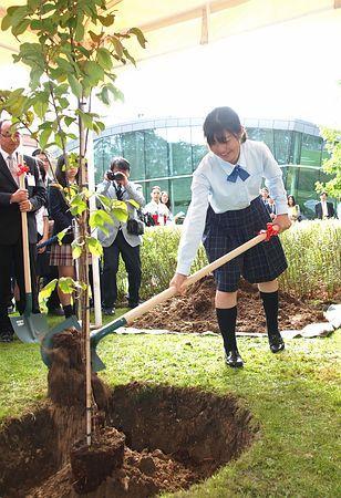 2日、パリの経済協力開発機構(OECD)本部で開かれた東北の桜の植樹式で、苗木を土に埋める福島県立磐城高校2年生の松本莉奈さん ▼2Sep2014時事通信|東北の桜、パリに植樹=復興願い被災地の中高生 http://www.jiji.com/jc/zc?k=201409/2014090200478 #oecd_tohoku_school