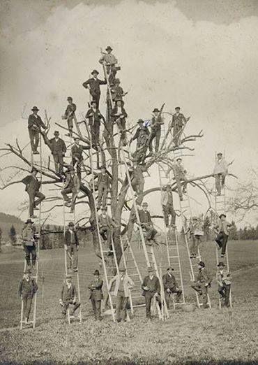 523 best STAMBOMEN en zo - FAMILYTREES and so images on Pinterest - 3 gen family tree template