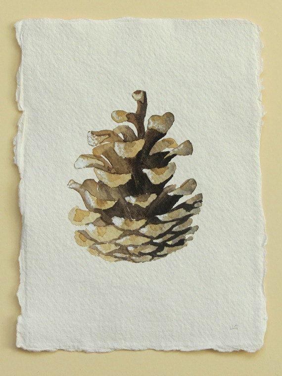Pine cone original watercolour illustration study painting.
