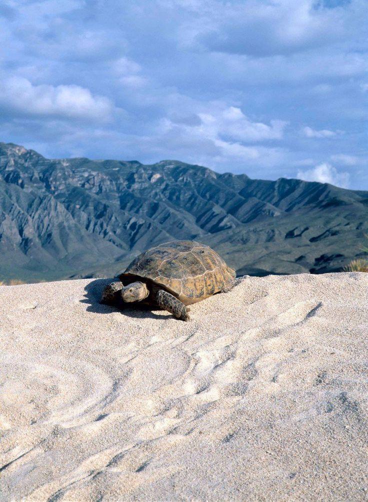 viajes baratos en mexico dunas de yeso