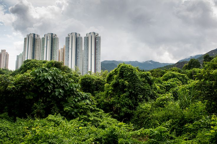 HONG KONG: HOW TO TACKLE THE TUNG CHUNG TO TAI O HIKE (& THE BEST WAY TO GET BACK ONCE YOU REACH THE END) — CITIZENS OF THE WORLD