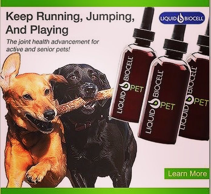 Did you know Modere also cares about furry friends? Their Liquid Biocell has been specially formulated to help active and senior pets. Promotes: healthy, flexible joints, tendons, & ligaments.  Supports: joint mobility & lubrication.  Maintains: healthy skin & a shiny coat. Plus, it has a great tasting natural flavor!   #modere #liveclean #qualityingredients #allnatural #pethealth #liquidbiocell #jointhealth #jointmobility #activepets #seniorpet #crueltyfree